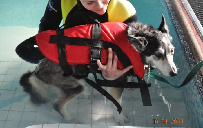 dog hydrotherapy courses